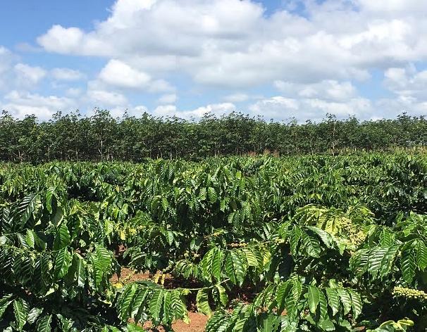 Sản xuất cà phê có thể giảm 50% áp lực môi trường mà vẫn duy trì giá trị gia tăng