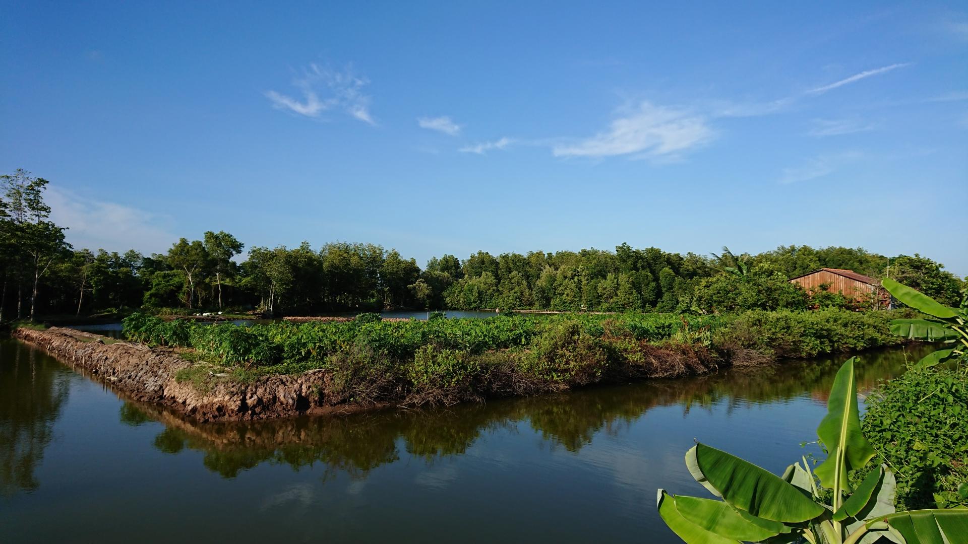 Phân tích hệ sinh thái rừng ngập mặn đối với nuôi trồng thủy sản ở Việt Nam